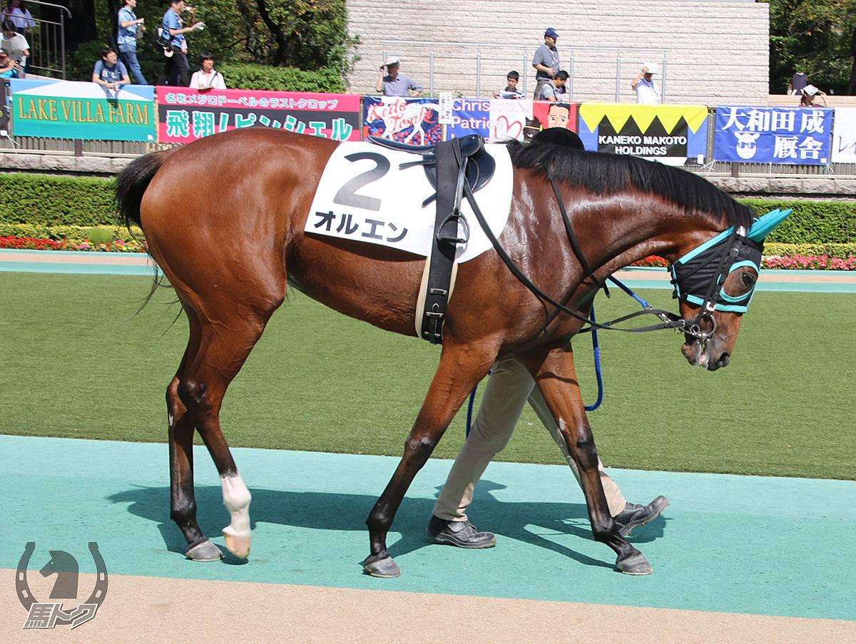 オルエンの馬体写真