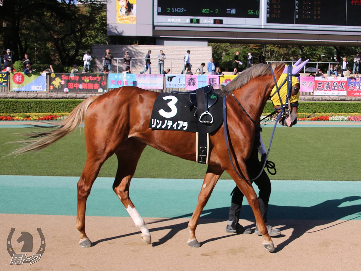 リンノティアラの馬体写真