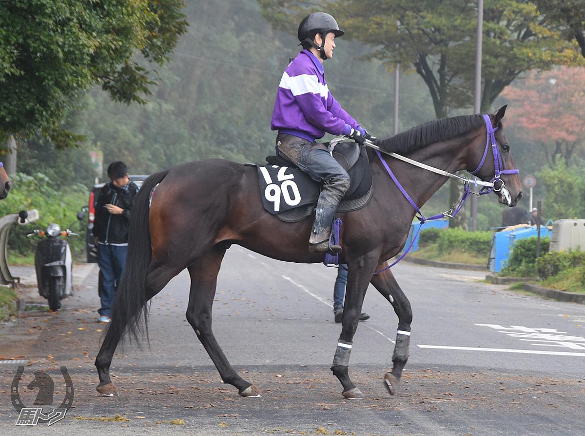 アスターブリザードの馬体写真