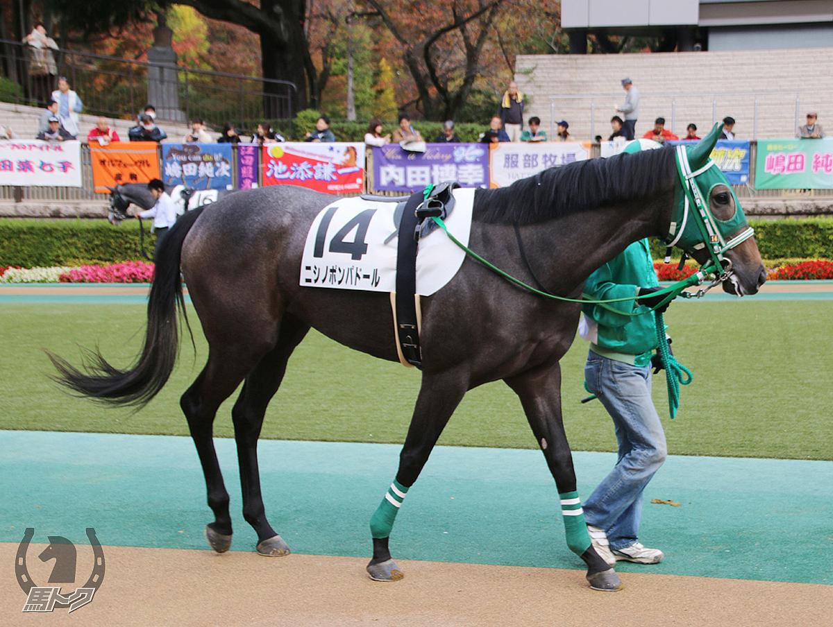 ニシノポンパドールの馬体写真