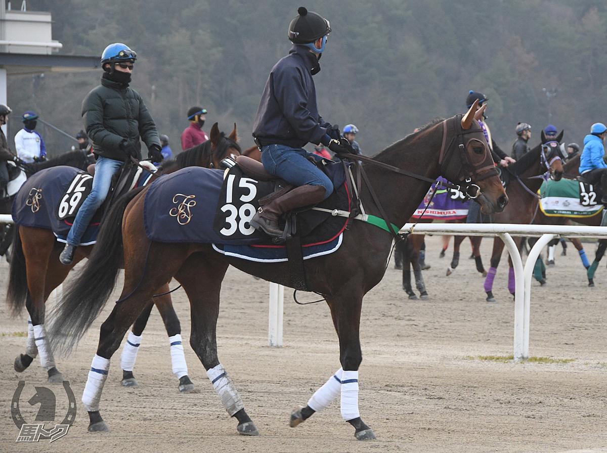 ペイシャクレアの馬体写真
