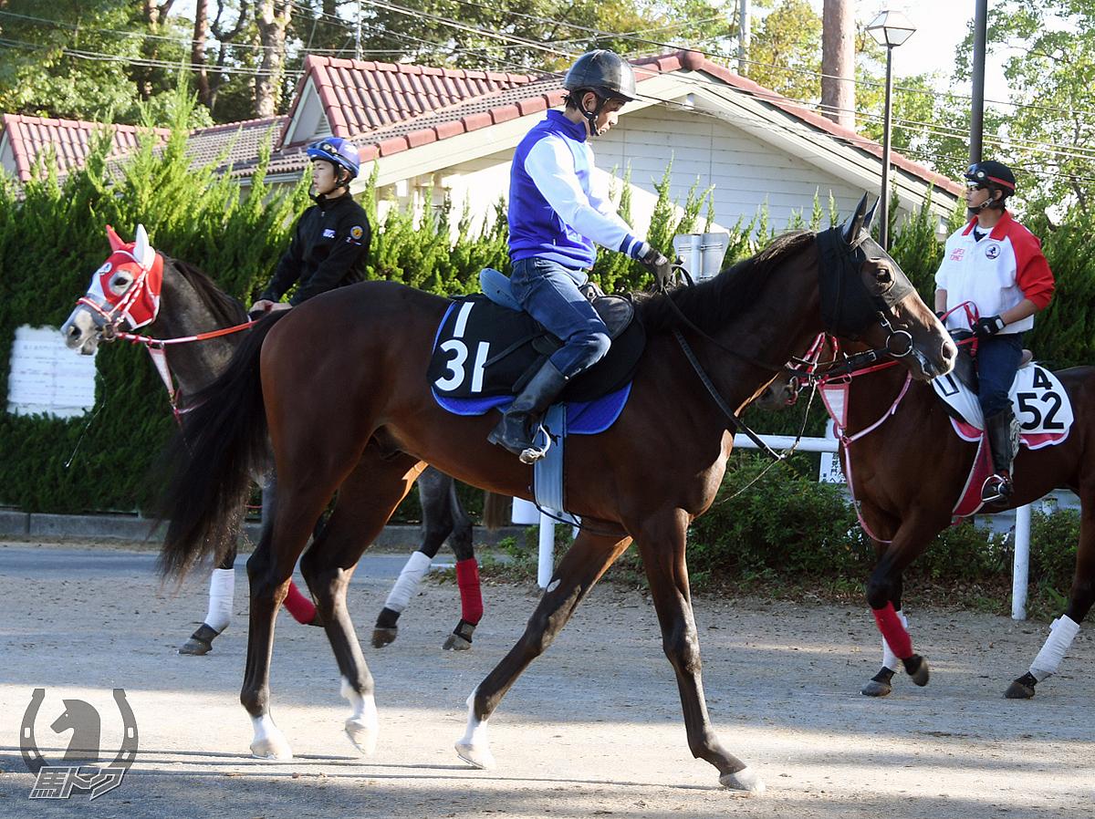 ウェーブライダーの馬体写真