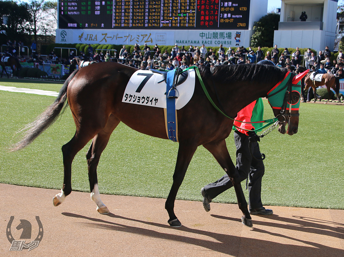 タケショウダイヤの馬体写真