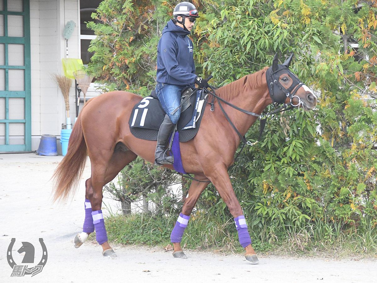 スパンキーワールドの馬体写真