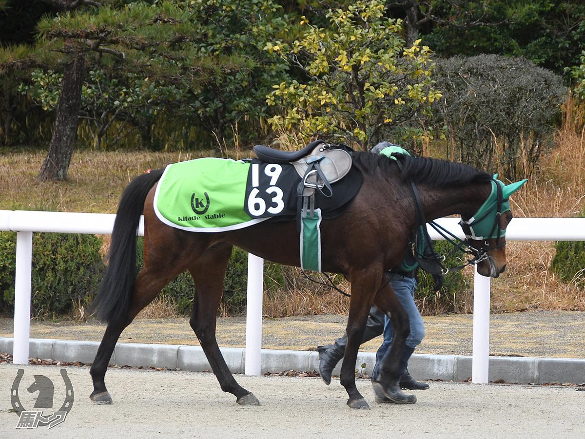ブーケアルメリアの馬体写真