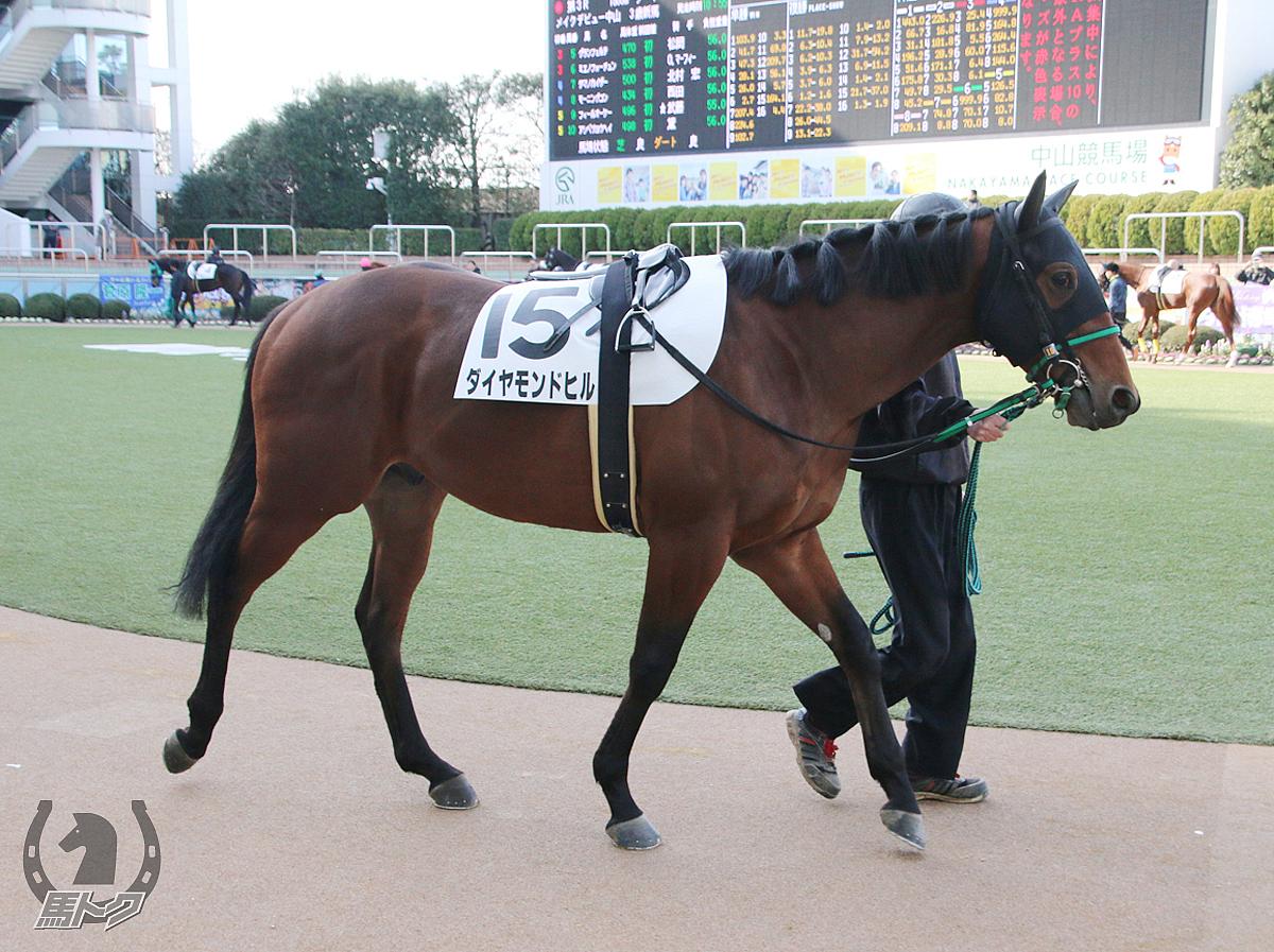 ダイヤモンドヒルの馬体写真