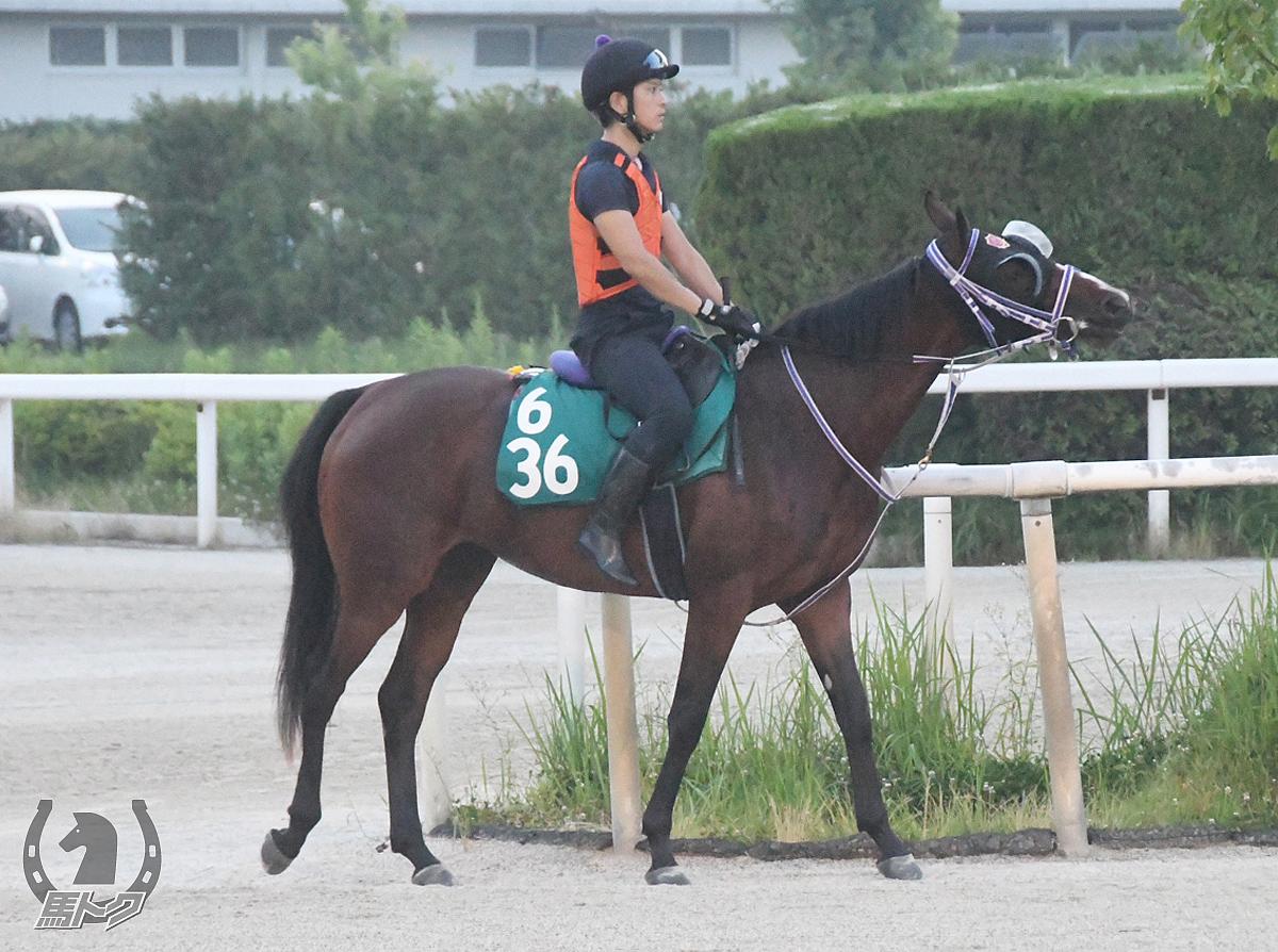 ユンゲンハフトの馬体写真