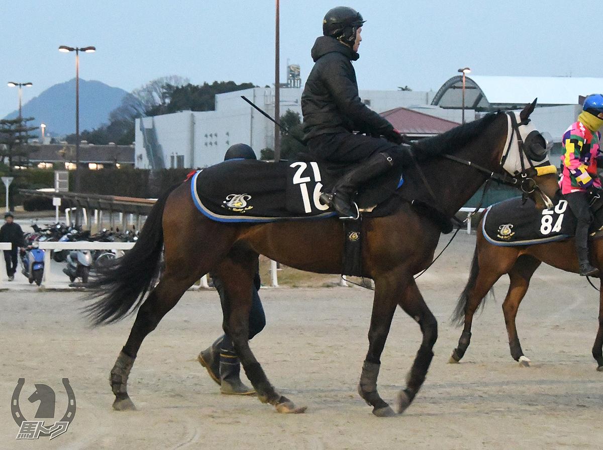 クライストチャーチの馬体写真