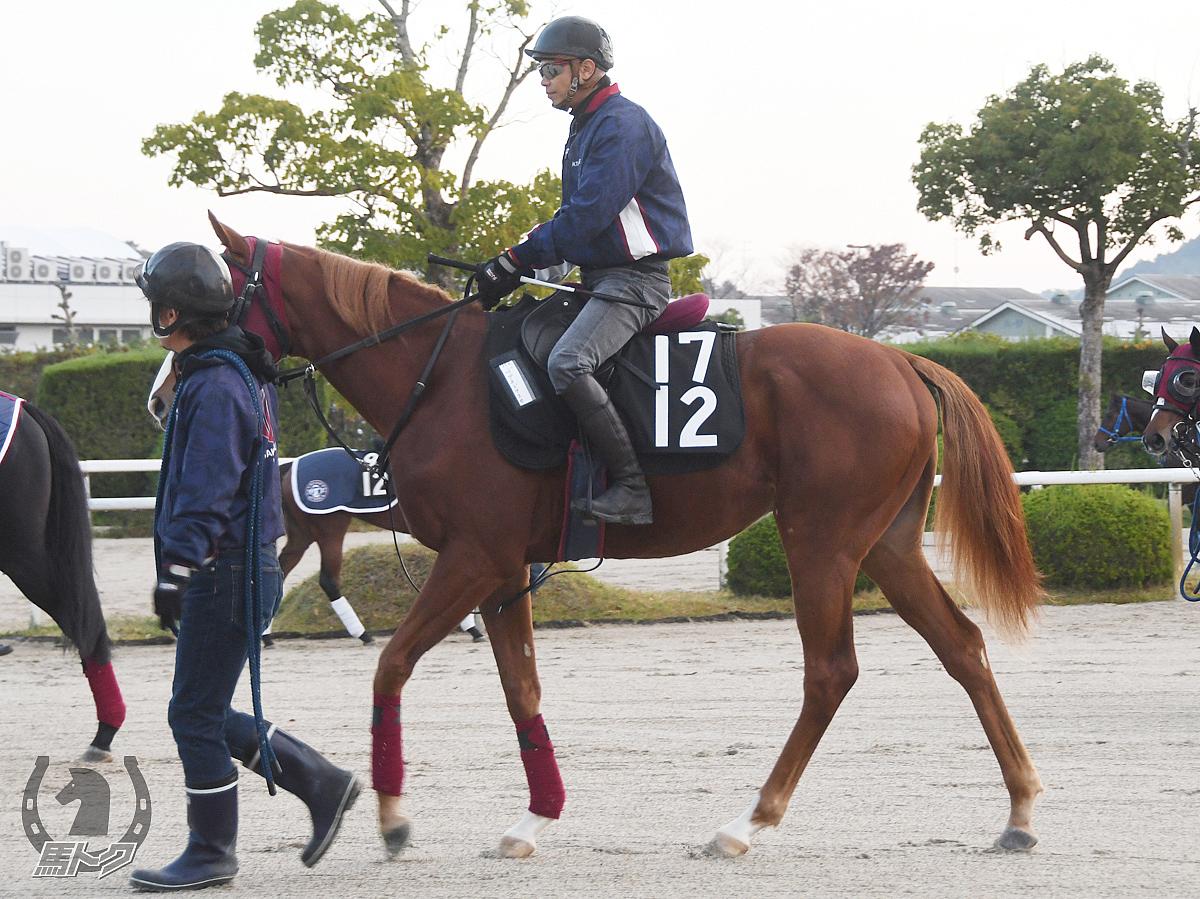 ペプチドアスカの馬体写真