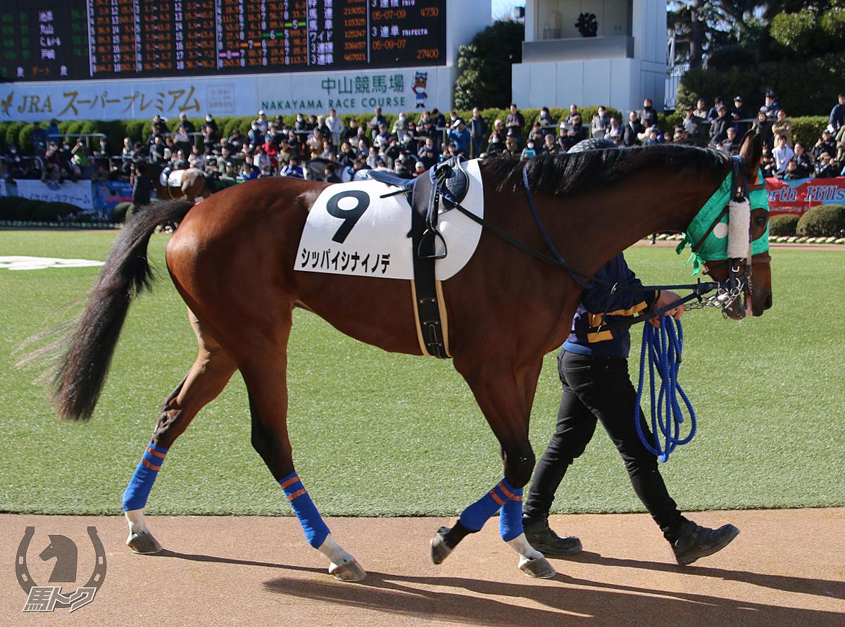 シッパイシナイノデの馬体写真