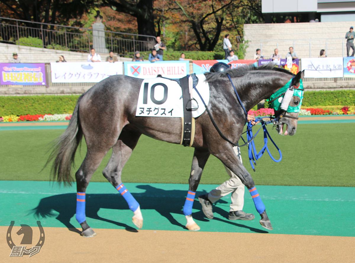 ヌチグスイの馬体写真