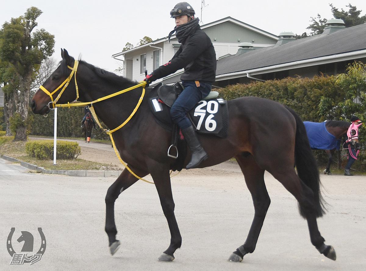 ナムラシンゲキの馬体写真