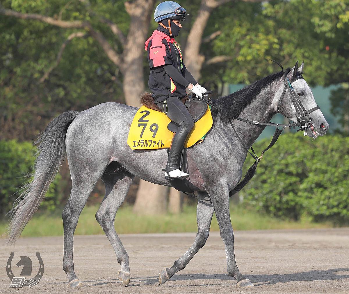 エメラルファイトの馬体写真
