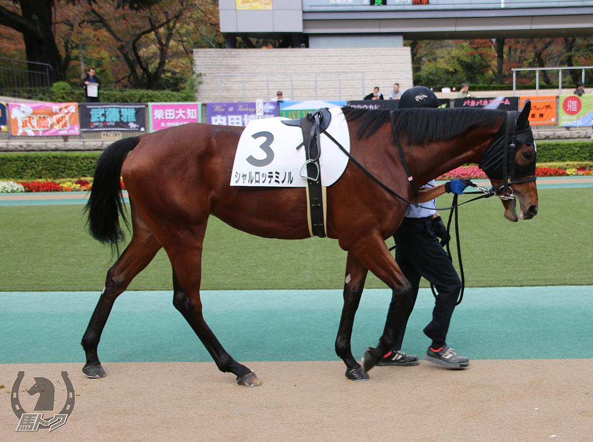 シャルロッテミノルの馬体写真