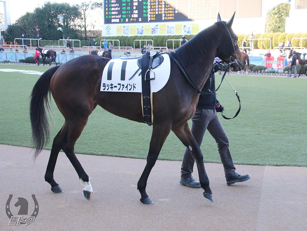 ラッキーファインドの馬体写真