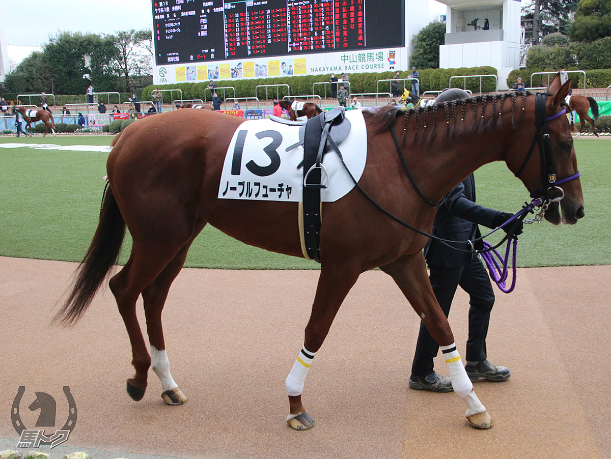 ノーブルフューチャの馬体写真
