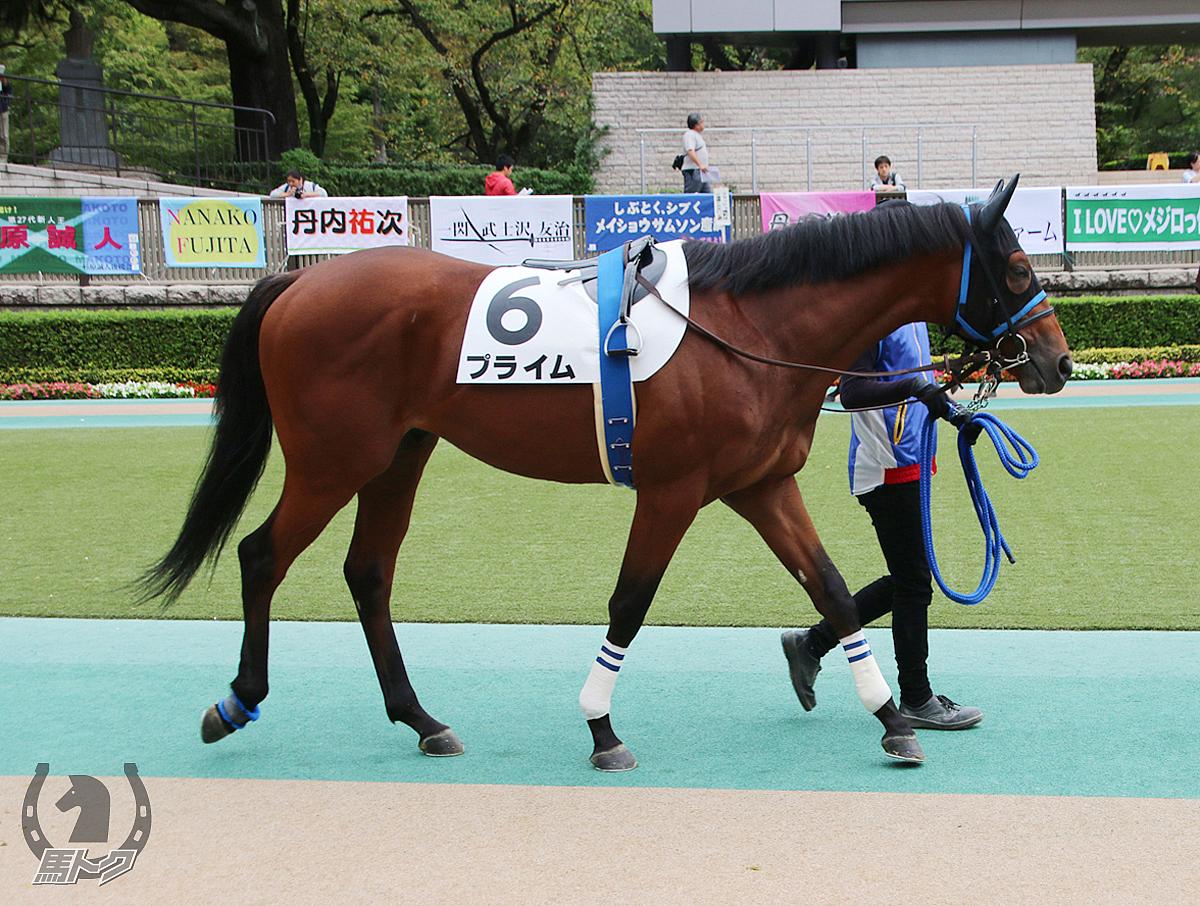 プライムの馬体写真