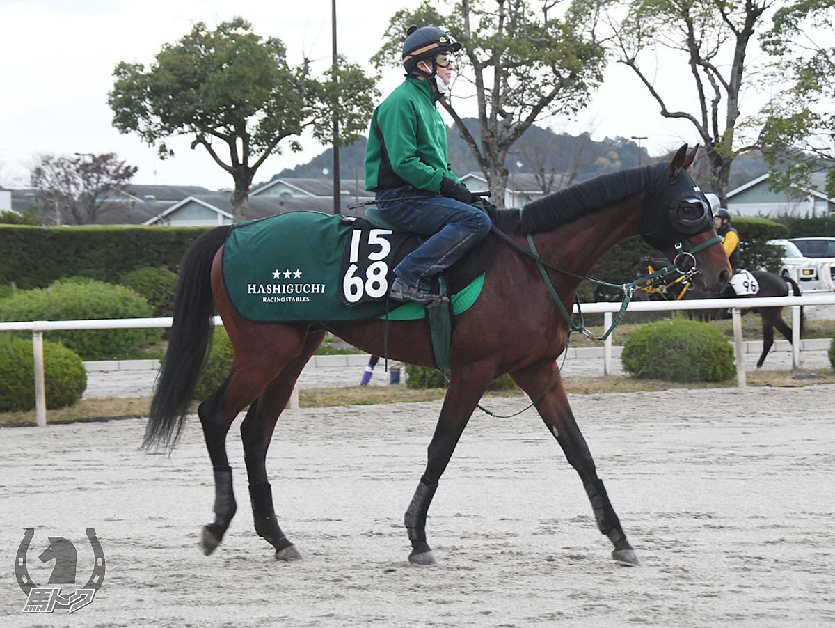 モーニングサンの馬体写真