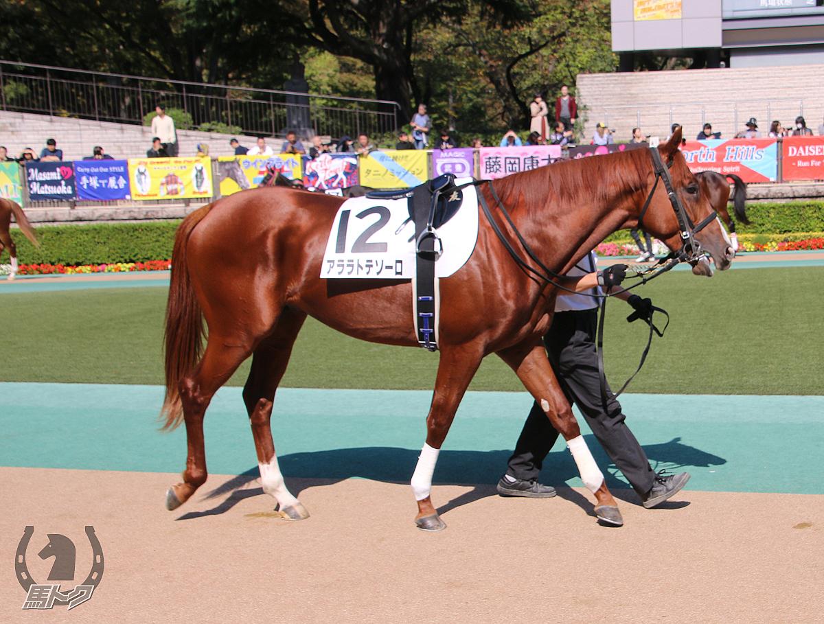 アララトテソーロの馬体写真