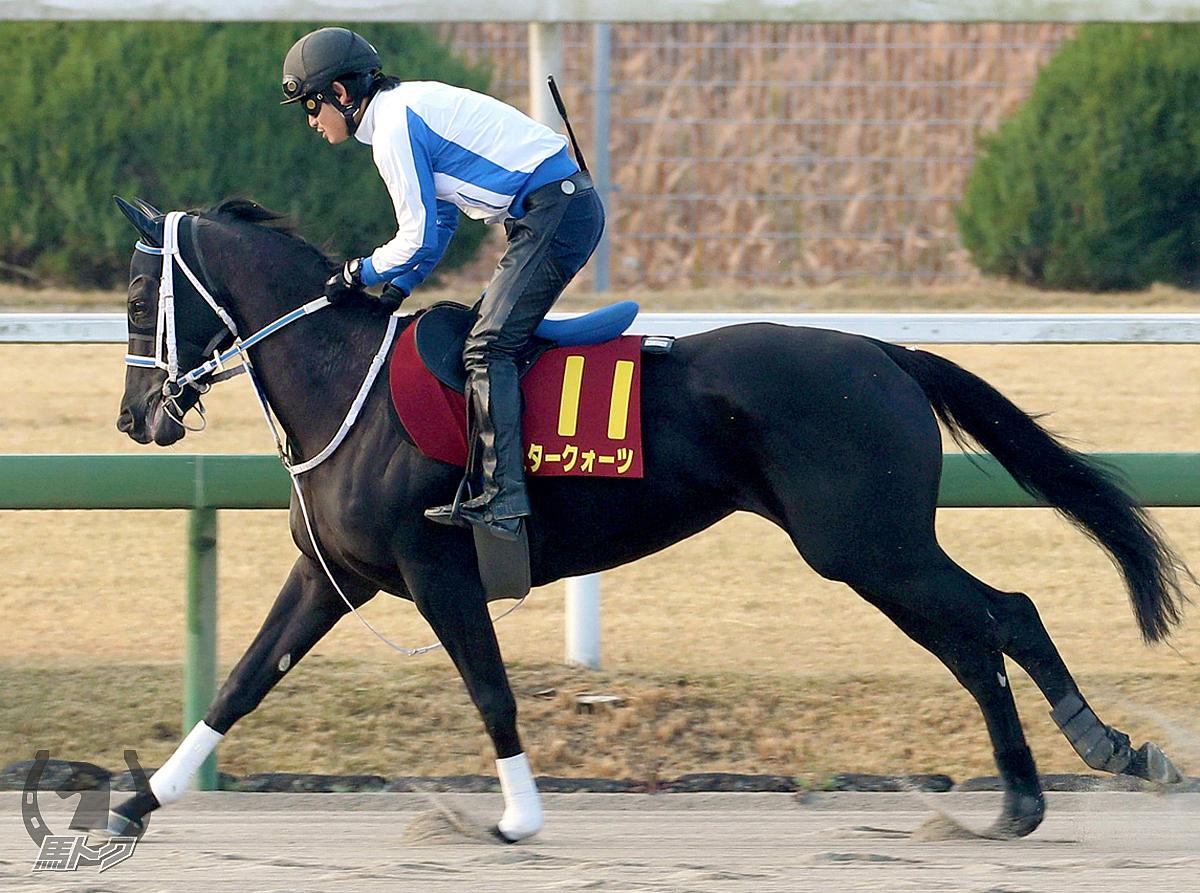 スタークォーツの馬体写真