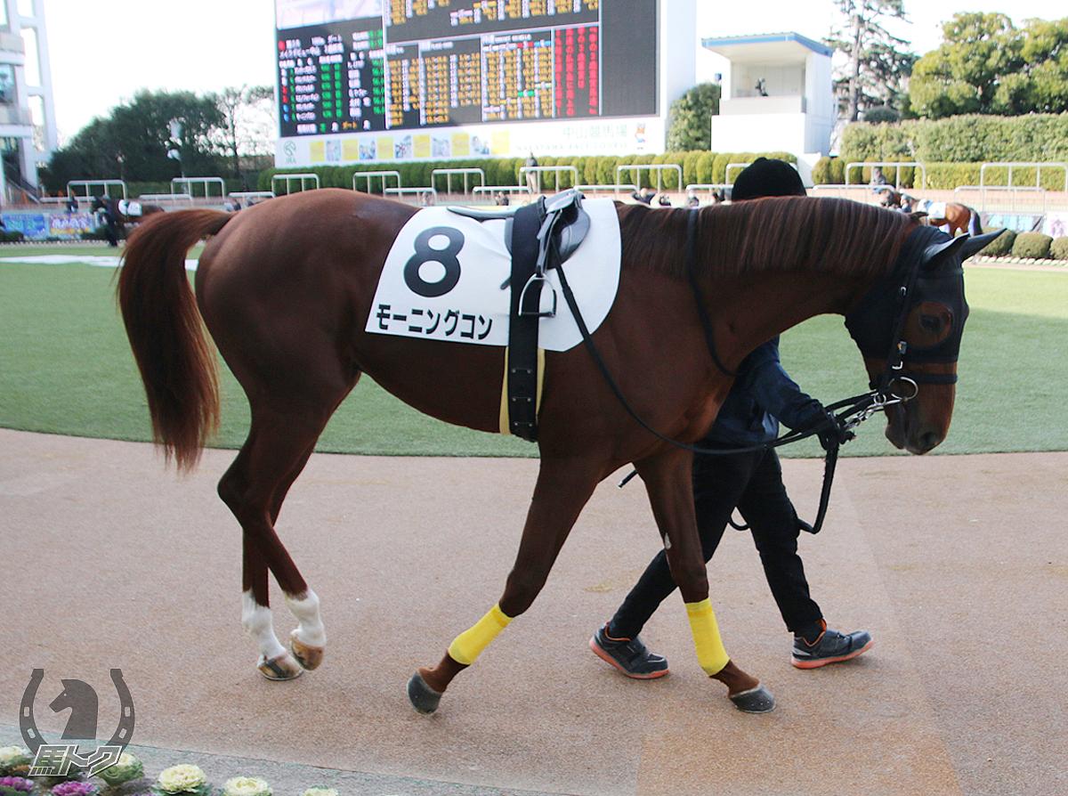 モーニングコンの馬体写真