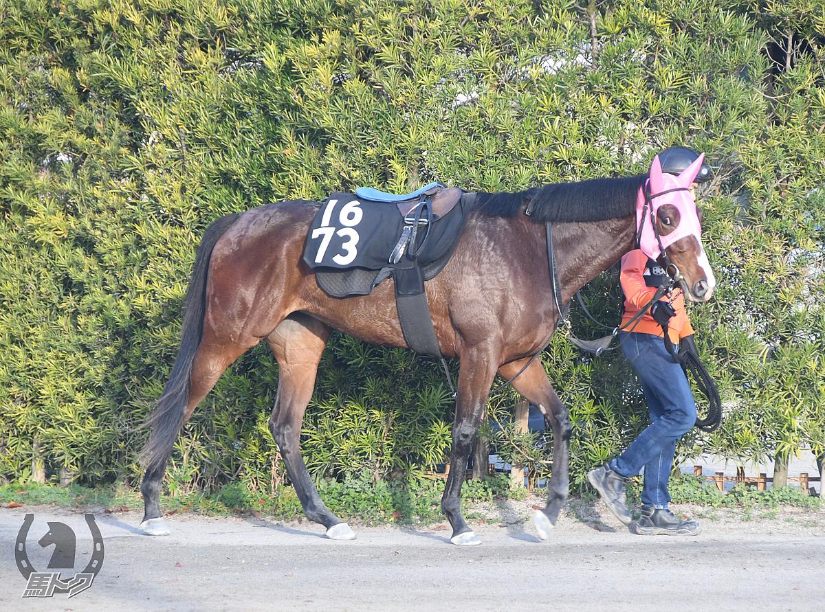 アンジュミニョンの馬体写真
