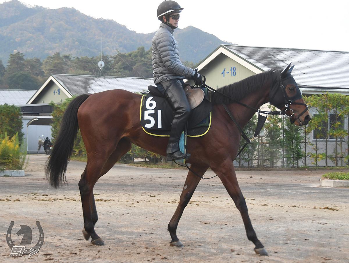 テイエムメロディーの馬体写真