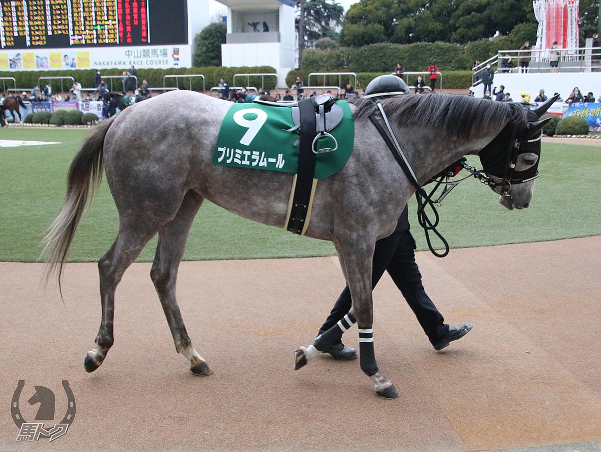 プリミエラムールの馬体写真