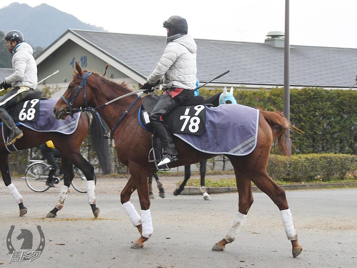 ナムラチヨガミの馬体写真