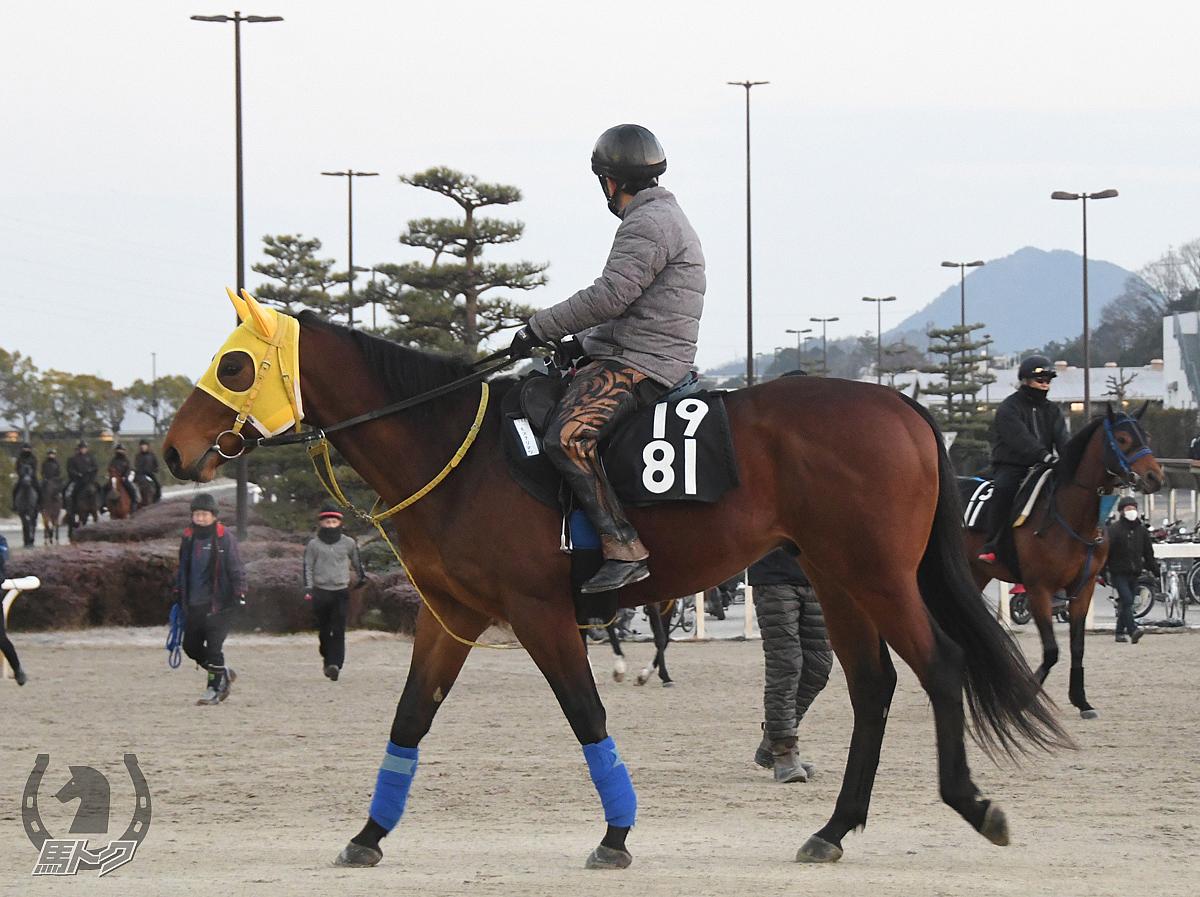 モズナリマツの馬体写真