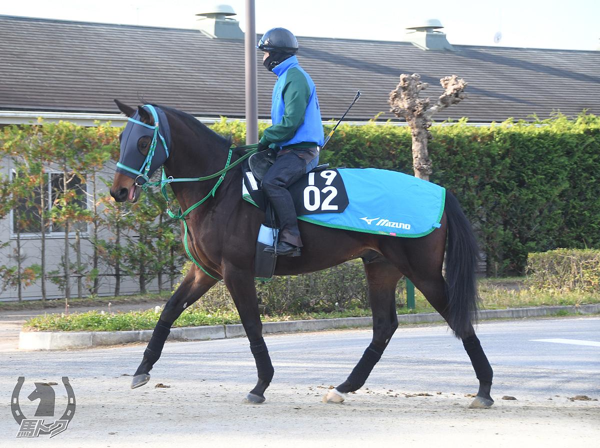 メモリーブラックの馬体写真
