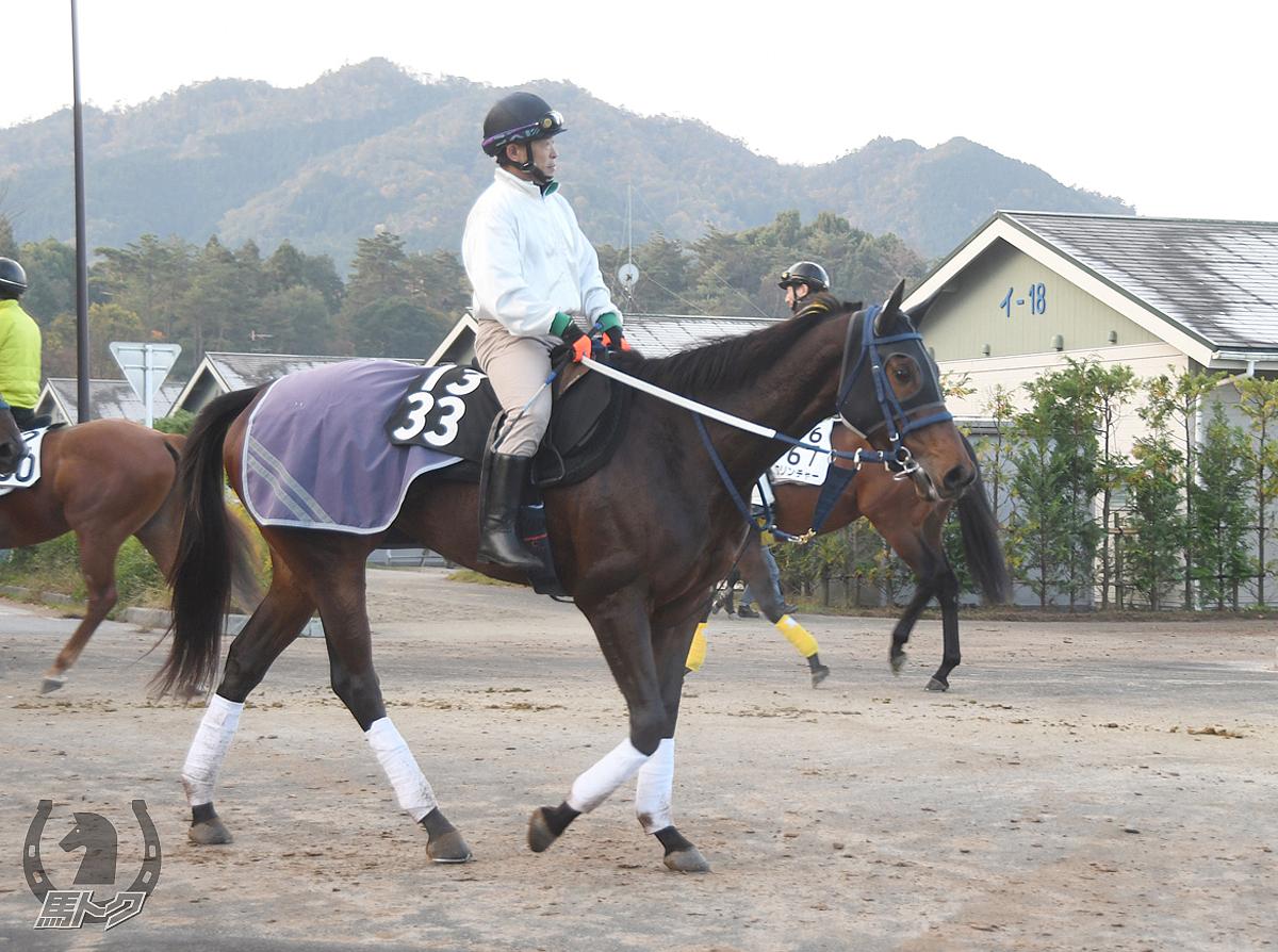 ヘイセイラストの馬体写真