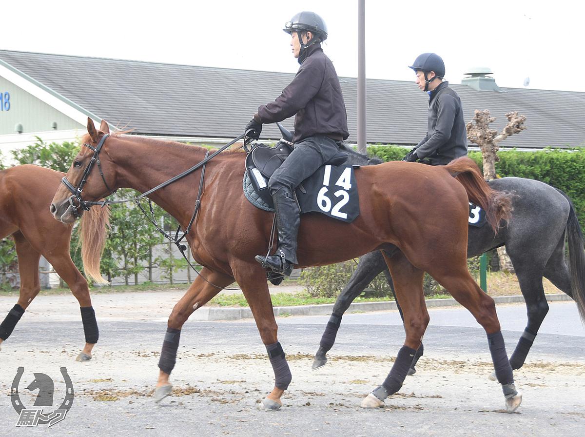ハクサンアンジェロの馬体写真
