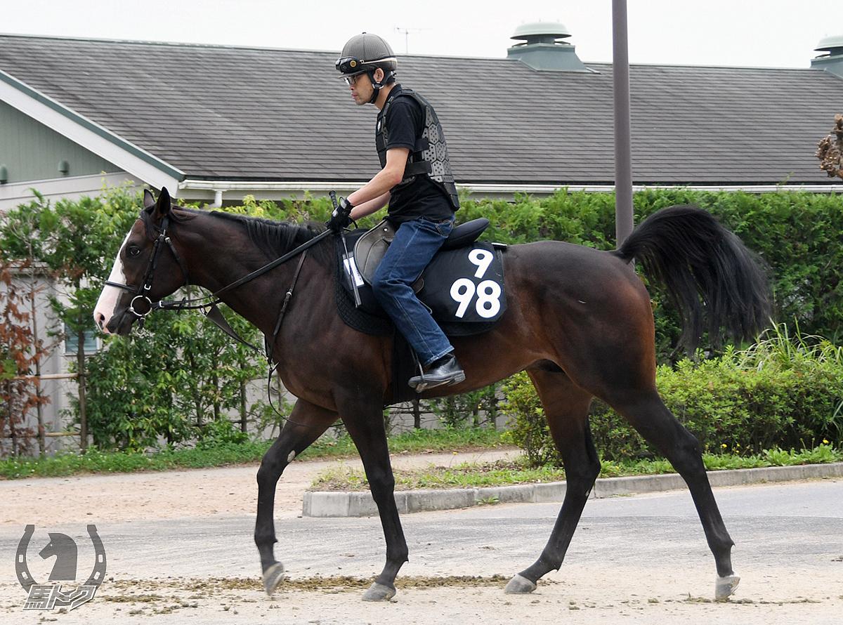ミラーグロの馬体写真