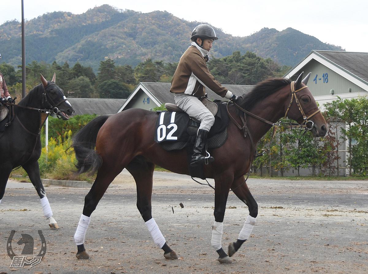 ラッキーバローズの馬体写真