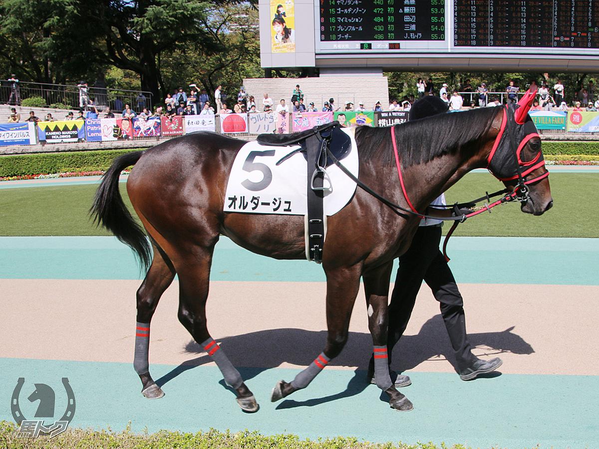 オルダージュの馬体写真