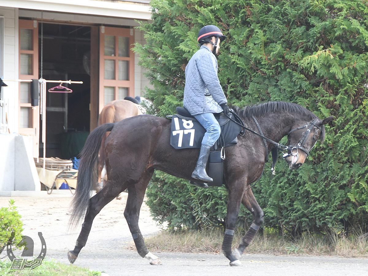 レッドルーヴルの馬体写真