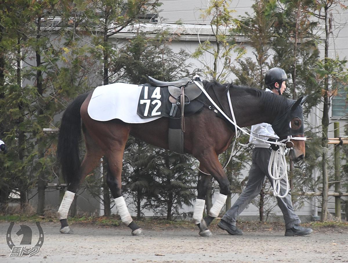 モズハチキンの馬体写真