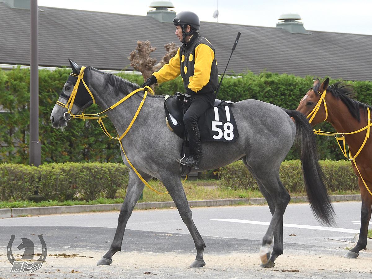 レターオンザサンドの馬体写真