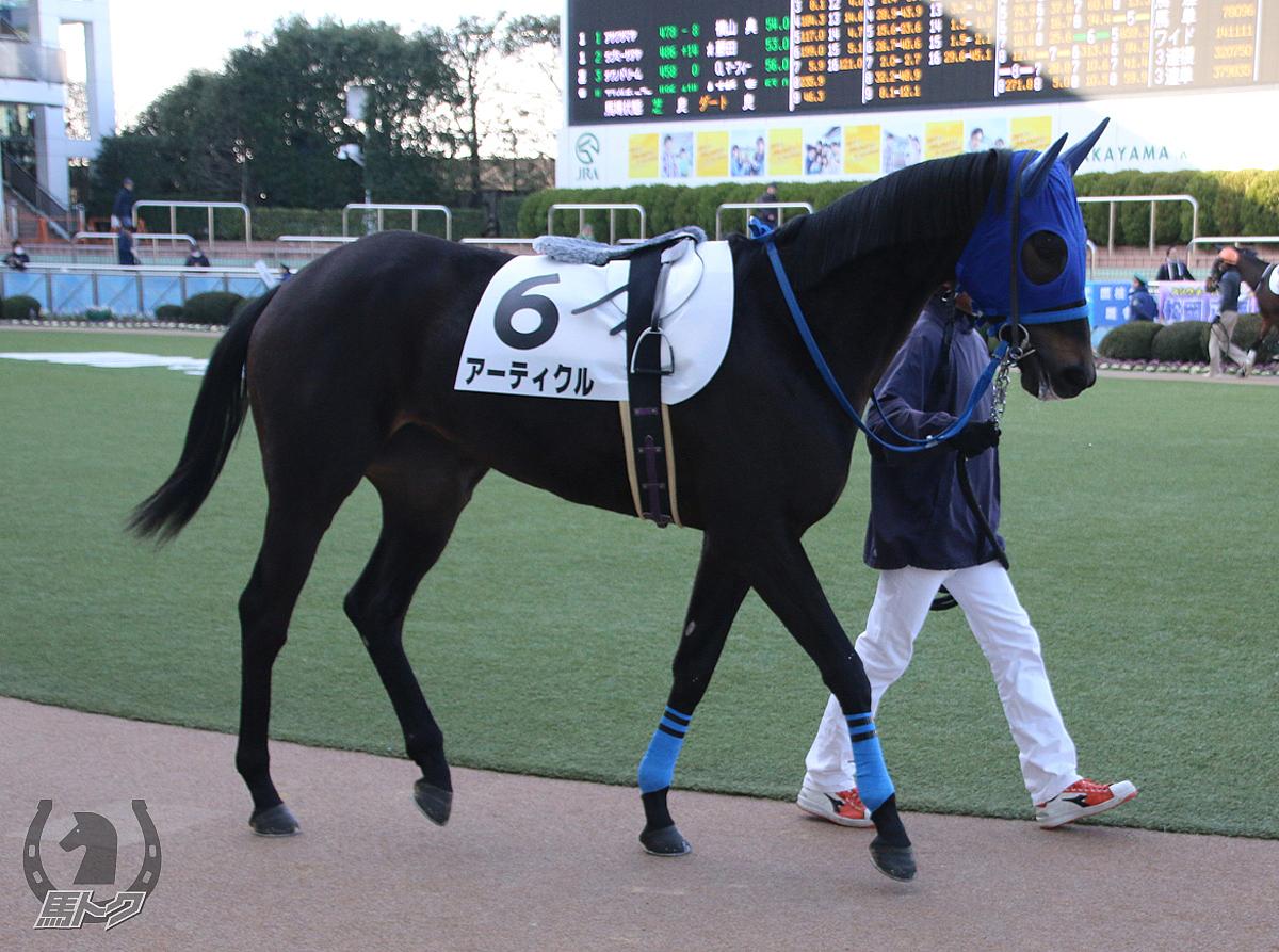 アーティクルの馬体写真