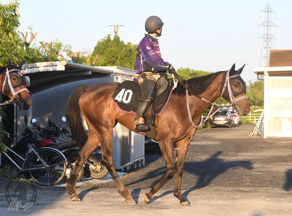 アドマイヤコメットの馬体写真