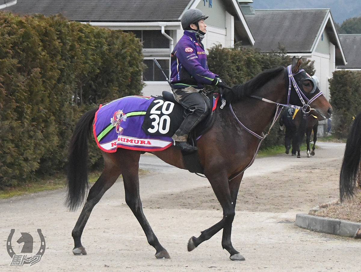 ヒルノバーゼルの馬体写真