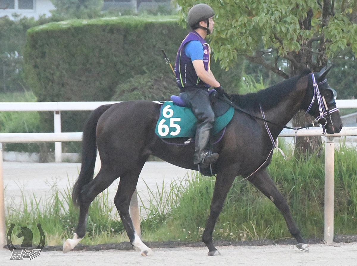 ゼッケイの馬体写真