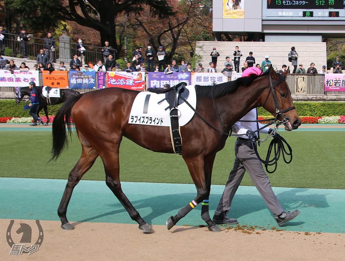 ラブイズブラインドの馬体写真