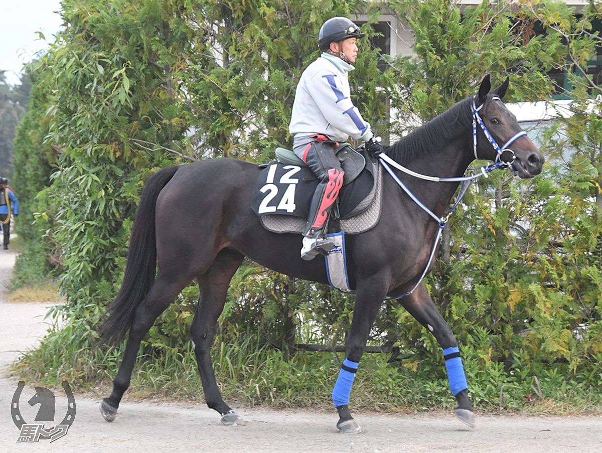 モツの馬体写真