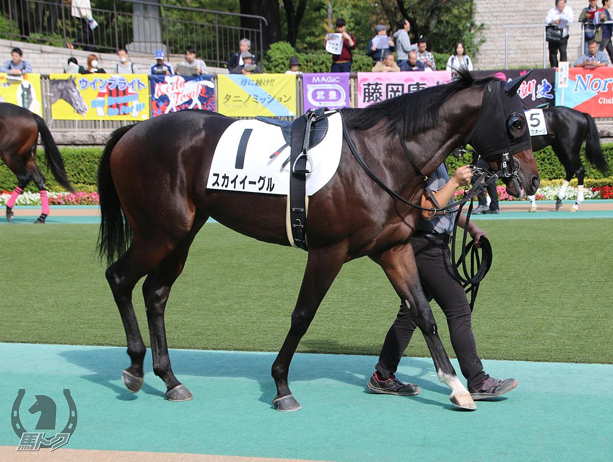 スカイイーグルの馬体写真
