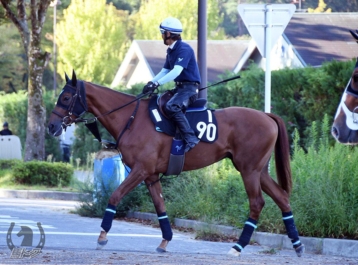オウケンラブルナの馬体写真