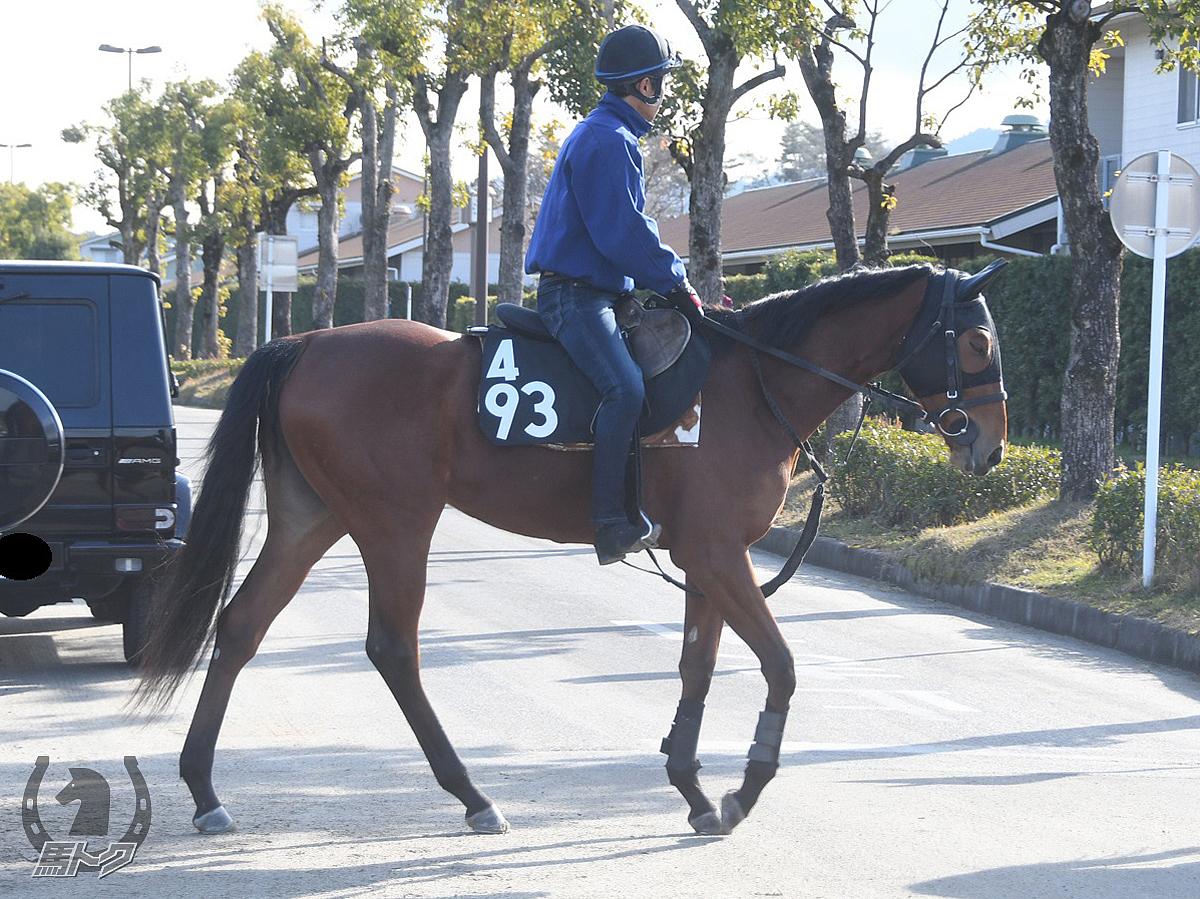 スズカオーロラの馬体写真