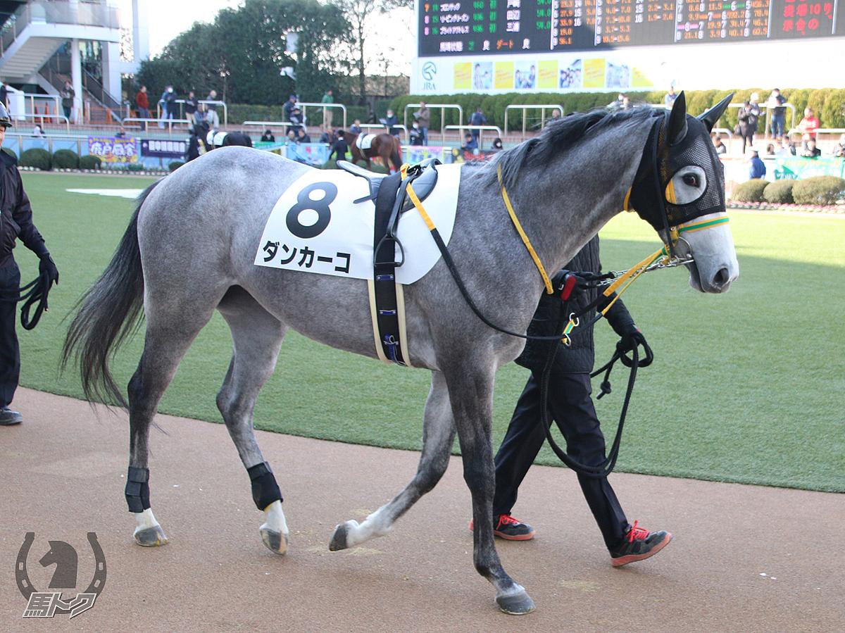 ダンカーコの馬体写真