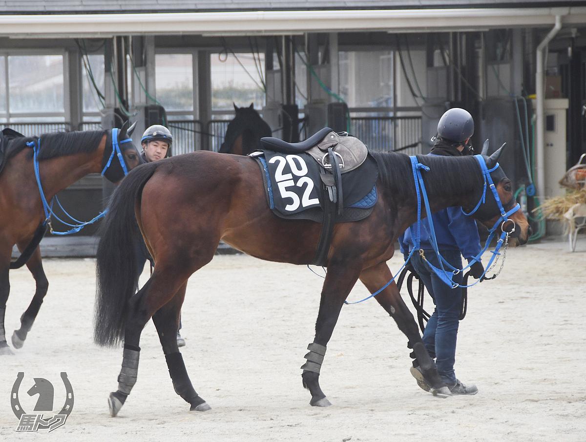 ライワルツの馬体写真
